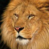 Célio Pezza: 'Leões e ovelhas'
